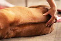 Udemy Coupon-Dog Massage Training Course