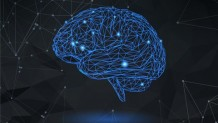 Udemy Coupon – Modern Neuroplasticity: How To Rewire Your Brain For Success